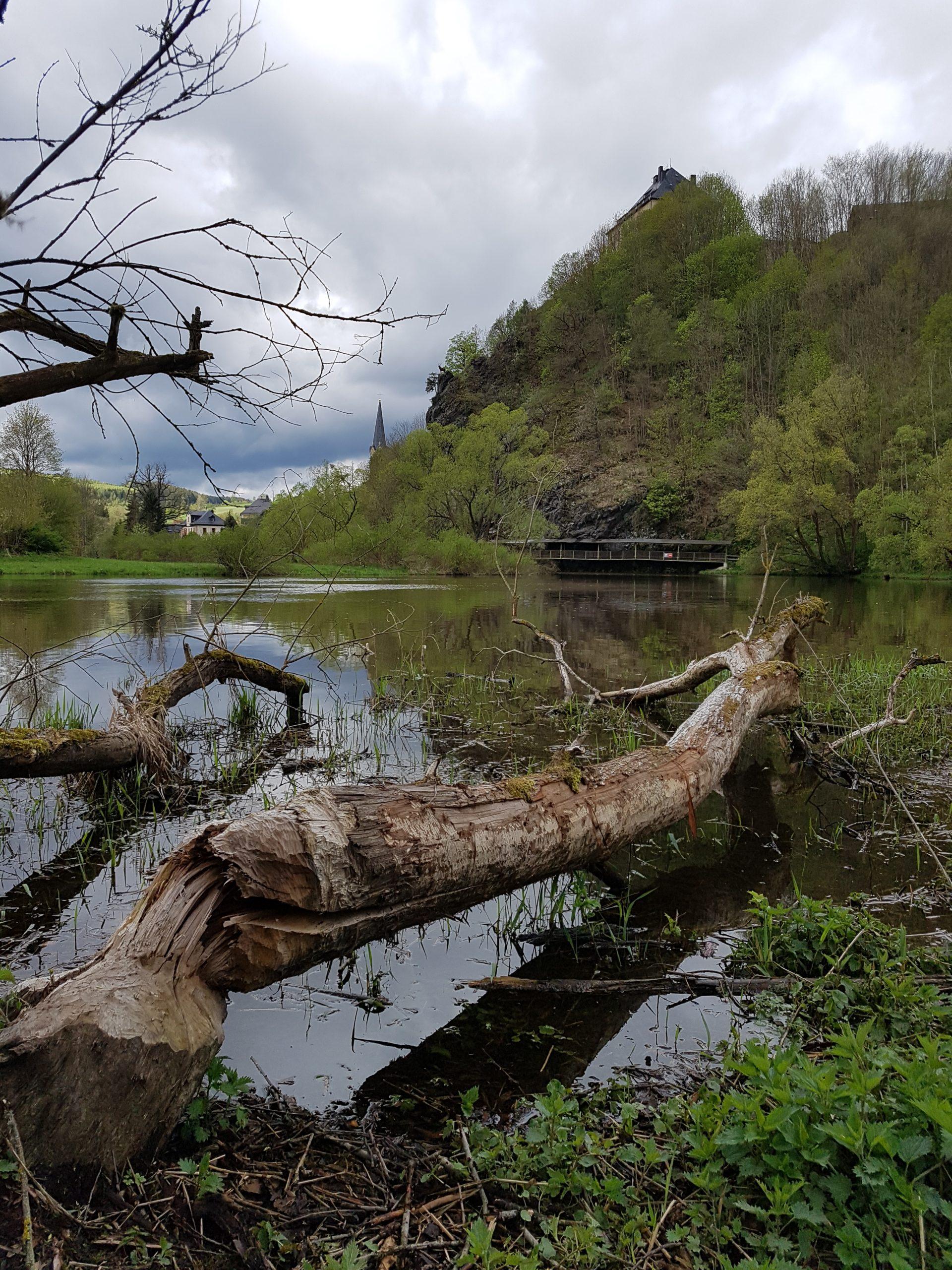 Der Urwaldpfad in Hirschberg (Saale)